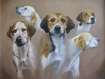 Cambridgeshire Hounds